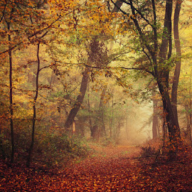 20171021-DSC_2665 by Zsolt Zsigmond - Landscapes Forests ( scenics, forest, beauty in nature, leaf, yellow, landscape, sunlight, gold colored, orange color, red, tree, nature, season, autumn, outdoors, branch, woodland )
