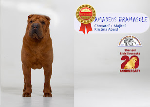 Photo: TOP Shar-pei 2015 pes