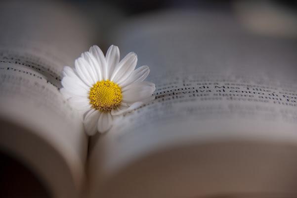 book flower di gabrielecollini