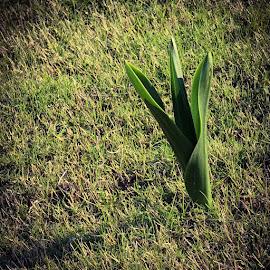 Nature  by Hüseyin Denizoğlu - Nature Up Close Leaves & Grasses ( nature )