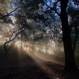 Treasure of the Sierra Madre by Mark Stackhouse - Instagram & Mobile iPhone ( sun rays, mexico, woodland, sun, trees, misty, sierra madre )
