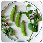 Organic Dwarf Grey Sugar Snow Pea