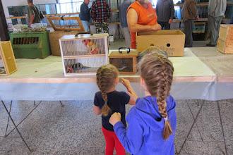 Photo: Animal sale at Ujezd u Brna.