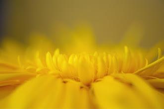 Photo: Goodnight #floralfriday +FloralFriday+Breakfast Club #flowerphotography