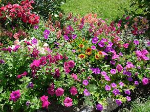 Photo: Eine Meer von bunten Blüten!