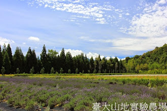 Photo: 拍攝地點: 梅峰-一平台 拍攝植物: 薰衣草 拍攝日期:2013_07_05_FY