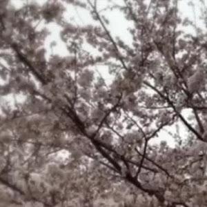 ルーテシア RM5M1のカスタム事例画像 kazu🇫🇷♦︎🚗さんの2020年03月29日00:50の投稿