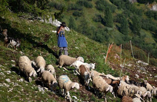 il pastore di renzo brazzolotto