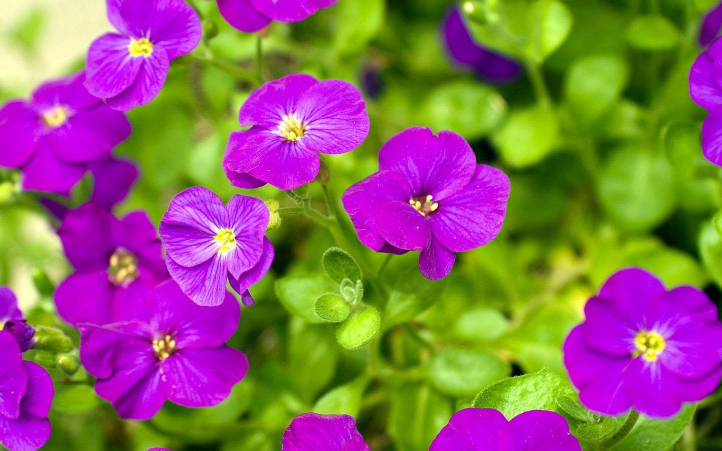 Purple Flower Wallpaper - Android Apps on Google Play