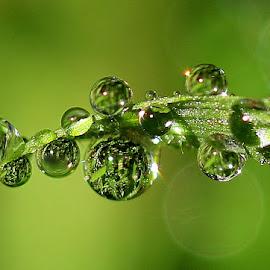 by РАЙНА СИНДЖИРЛИЕВА - Nature Up Close Natural Waterdrops