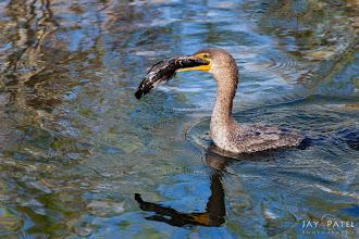 Photo: Everglades National Park, Florida (FL), USA