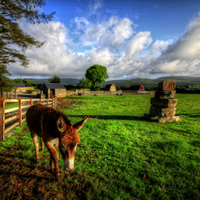 Top of the Rock by Alfred Encallado - Landscapes Prairies, Meadows & Fields ( ireland, field green, donkey, view, morning, top,  )