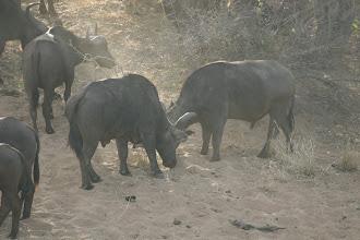 Photo: Kruger National Park. Confluence Lookout