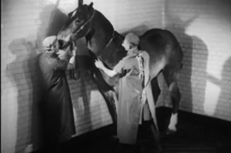 图2:准备马以收获白喉抗体用于制造抗毒素。来源:由G.B制备的白喉抗毒素和预防性(薄膜)的制备。教学有限公司,1945年。