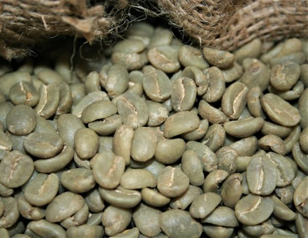 raw coffee beans before roasting
