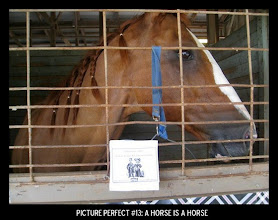 Photo: Point values for this target: 3 Points for a picture of a horse; 5 Points for a horse statue or figurine; 7 Points for a live horse. Email your submission to contests@superficialgallery.com.