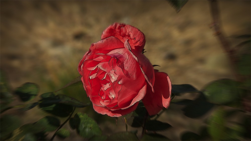 Driveway Rose FXed.jpg