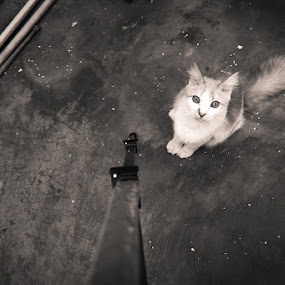 Looking at me by Andhika Satya - Animals - Cats Portraits ( cat, black white, bird eye )