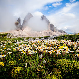 tre cime by Zoran Stegnjaić - Landscapes Mountains & Hills ( dolomites, mountain, mountains, flowers, alps, italy, landscape, fog )