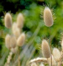 Photo: 110. I liked the seedheads on this grass.