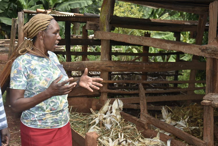 Ngorongo village resident Jane Waithera shows her cow shed where thugs broke into and stole her dairy cow.