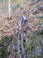 Photo: Brian sawing the branch above the entrance