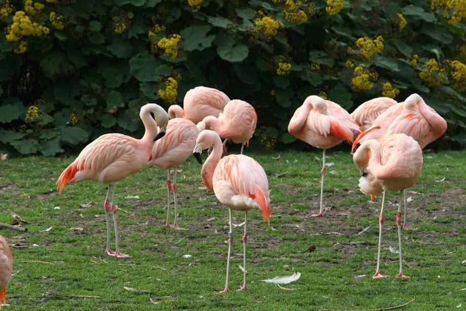 Foto Zoo Barcelona 9