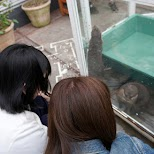 Otter Cafe in Harajuku: HARRY ZOO in Tokyo, Tokyo, Japan
