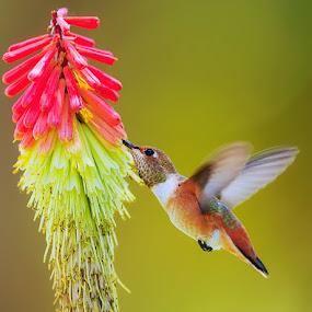 Sweet  by Dan Pham - Animals Birds