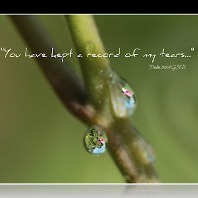 Record of Tears by Robert George - Typography Quotes & Sentences (  )