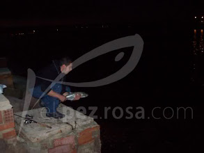 Photo: suelta anjovas nocturnas seashot. Borja.