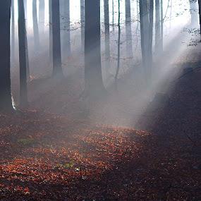 magical forest by Jana Černošková - Landscapes Forests ( forest, rays,  )