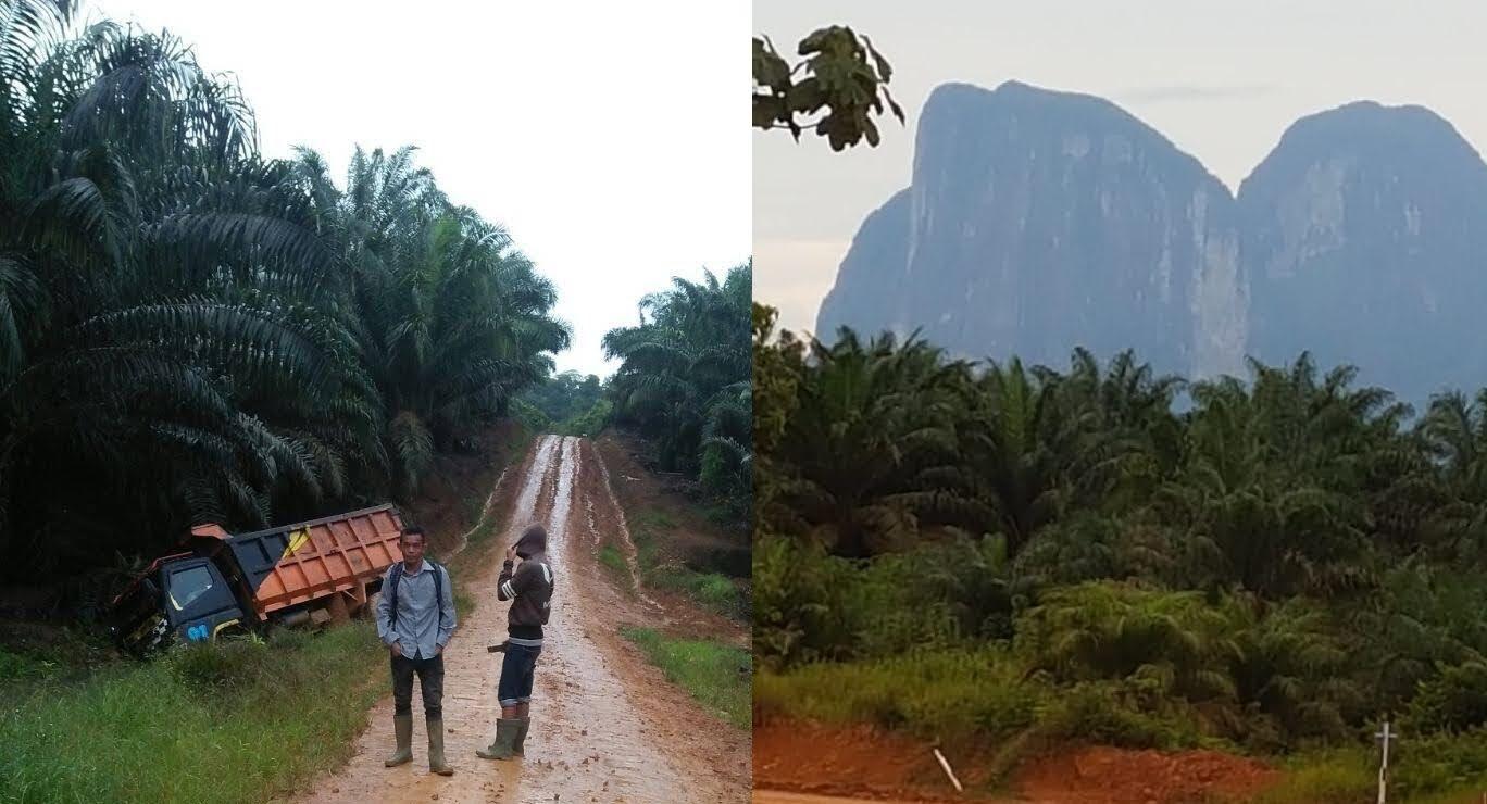 Bapak Presiden Jokowi Lapor : Semenjak Pabrik Sawit Masuk Kalimantan Barat, Justru Banyak Orang-Orang Pribumi Masuk Penjara