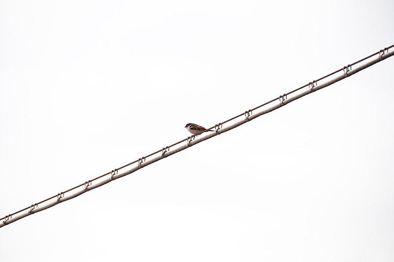 passero solitario di dady2
