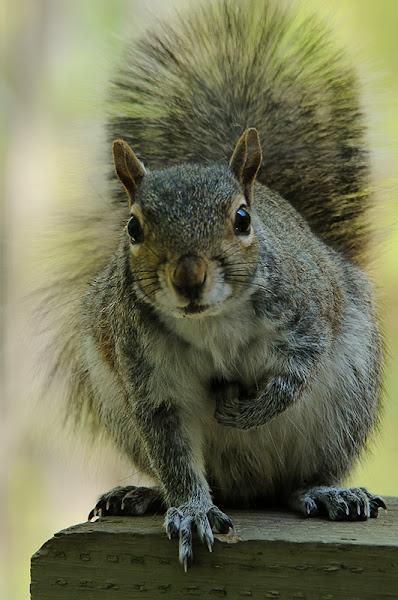 Photo: Staring Squirrel