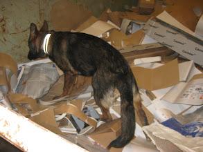 Photo: Dakota 5 mnd søker etter nissen i en kontainer med papp