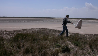 Photo: Sweeping for Chaetocnema rileyi on South Padre Island. (Didn't find any.)