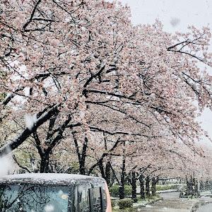 Nボックス JF1 のカスタム事例画像 ichi-juさんの2020年03月29日18:14の投稿