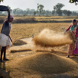 Paddy Processing by Anitava Roy - People Professional People ( farmers, rice, paddy field, peoples, worker,  )