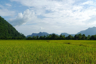 Photo: Our journey around Vang Vieng and across Laos was filled with views of sticky rice fields laden with ripening stalks