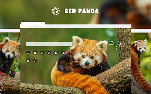 Red Panda Hd Wallpaper New Tab Theme