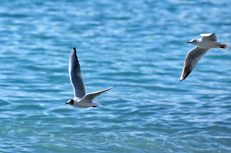 le ali della libertà.... di Elisabetta Castellano