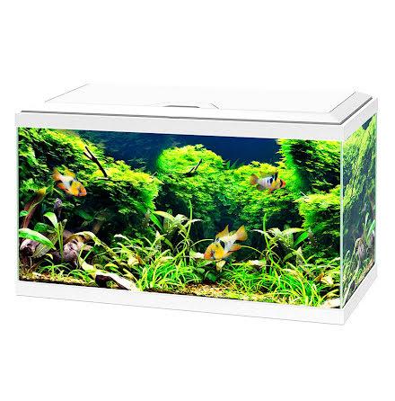 Ciano Vitt Aquarium 60