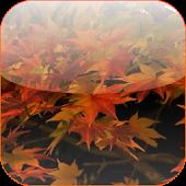 Autumn 3D Video Wallpaper