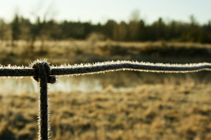 Photo: Frost, and fences.