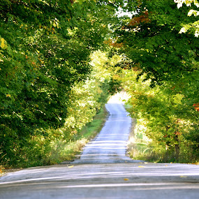 Tree Tunnel by Andy Bigelow - Landscapes Forests ( #autumn, #trees, #road, #foliage, #fall )