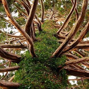 Inside the Redwood by Greg Van Dugteren - Nature Up Close Trees & Bushes