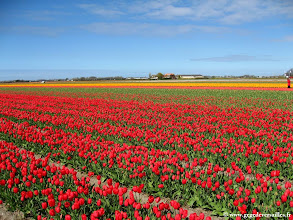 Photo: #003-Les champs de tulipes dans les environs de Lisse.