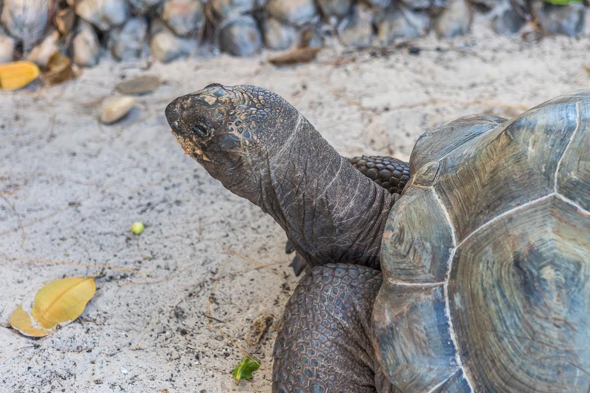 Лемуры, черепахи, вулканы, охи-ахи - по Индийскому океану на AidaBlu, январь 2019.