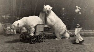 Photo: Friedrich Knie (1884-1941) bei einer Eisbaerennummer im Zirkus Knie, undatierte Aufnahme. (KEYSTONE/Str)